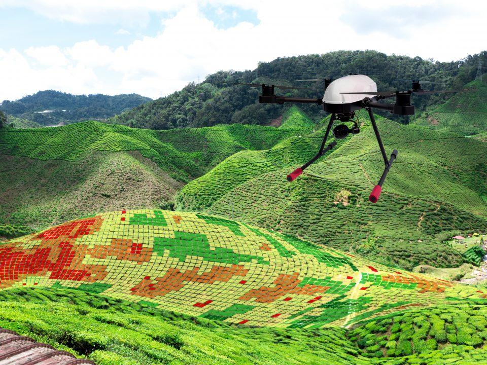 monitoramento vegetaçã